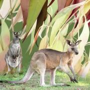 KangarooDay4